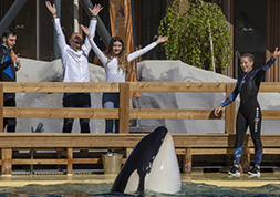 Approche des orques - Marineland Special Events