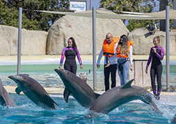 Approches des dauphins - Marineland Special Events