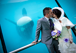 Mariage - Marineland Special Events