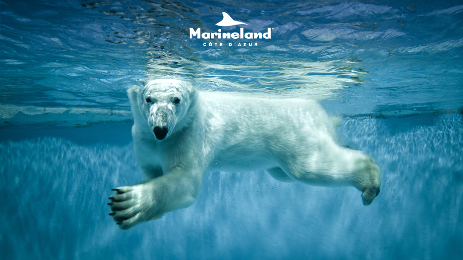 Jeu concours Passion Soigneur Ours - Marineland Antibes
